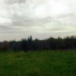Земля в Тверской области, Зубцовский район, д. Дорожаево